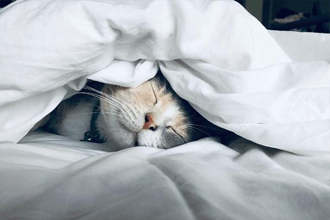 Waarom een topper een goede slaaphack is